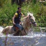 equestre-1