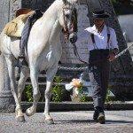 equestre-7